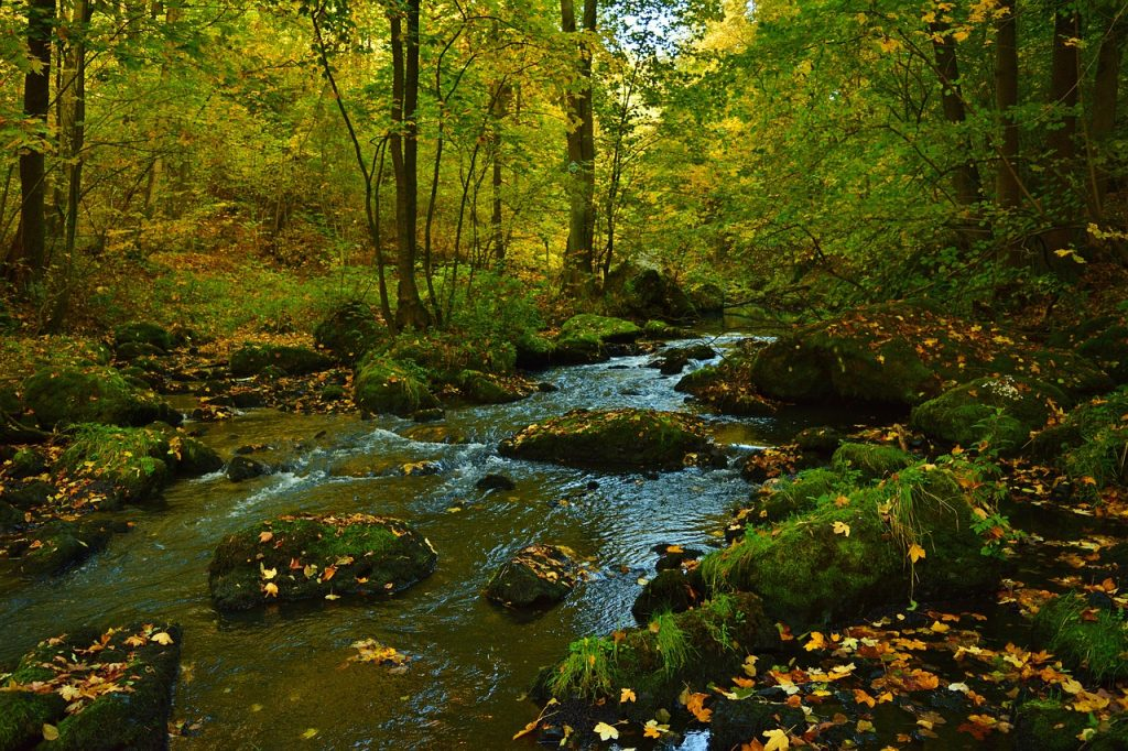Nature Creek Landscape Flowing  - jggrz / Pixabay
